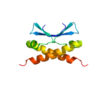 Protein CDCA8 PDB 2KDD.png