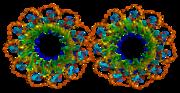 RAD52, involved in DNA repair