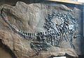 Protorosaurus speneri.jpg