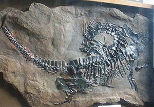 Protorosauria - Fossil specimen of Protorosaurus speneri, Teyler's Museum