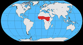 Ptilostomus distribution map.jpg