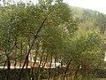 Pujiang, Jinhua, Zhejiang, China - panoramio (31).jpg