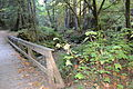 Purisima Creek Trail 9.JPG