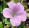 Purple Flower (3498098568).jpg