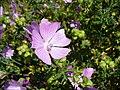 Purpleflowers9.jpg