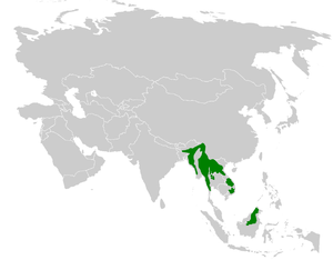 Flavescent bulbul - Image: Pycnonotus flavescens distribution map
