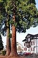 Rüti - Schlossberg 2011-01-07 12-54-20 ShiftN.jpg