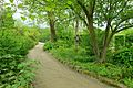 RHS Garden Harlow Carr - North Yorkshire, England - DSC01446.jpg