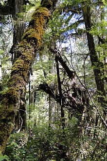 Forest Bus Tours Vancouver Island