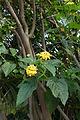 Ramat Gan flowers 12 2015 (108).JPG