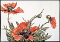 Red Poppies MET DT7455.jpg