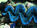 Reef2302 - Flickr - NOAA Photo Library.jpg
