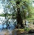 Rehbachmündung - panoramio.jpg