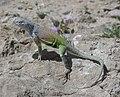 Reptile tx usa.jpg