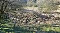 Retting pond below Braid Wood, Sorn, East Ayrshire.jpg