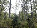 Rezerwat przyrody Dęby w Meszczach 11.24 01.jpg