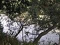 Riserva naturale oasi di Campagna (foto di Peppe Pepe di Angri) - panoramio - Giuseppe Pepe (9).jpg