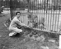 Roofdierenverzorger Frits Verbrugge gered in leeuwenkooi door collega Rudi Sitte, Bestanddeelnr 910-2774.jpg
