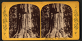 Rough and ready, from Robert N. Dennis collection of stereoscopic views.png
