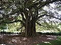 Royal Botanic Gardens, Sydney 11.JPG