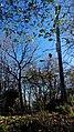 Ruiny Sanktuarium Matki Bożej Bolesnej z 1743 r., Kapliczna Góra 2018.10.31 (05).jpg