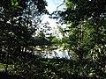 Rybník poblíž Putimi (002).jpg