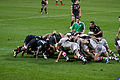 ST vs Harlequins - Match-26.jpg
