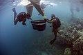 Sailors help repair a damaged coral reef in Apra Harbor. (35590643746).jpg