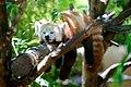 San Diego Zoo, San Diego, United States (Unsplash QZwf5yNopUo).jpg