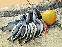 Sao Tome Praia Inhame Harpooned Fish 5 (16248199912).jpg