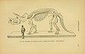 Sceleton of Triceratops.jpg