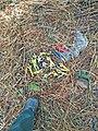 Scissors used to trim marijuana plants (30435167985).jpg
