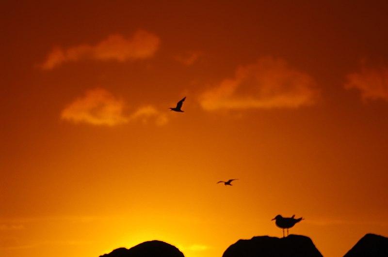 Seagull sunset gnangarra.jpg
