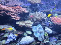 Seattle Aquarium, exhibit - April 2012.JPG