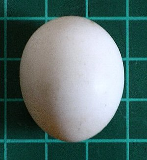 Bird egg - Image: Senegal egg 10s 06