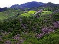 Serra de Ubatuba, SP.jpg