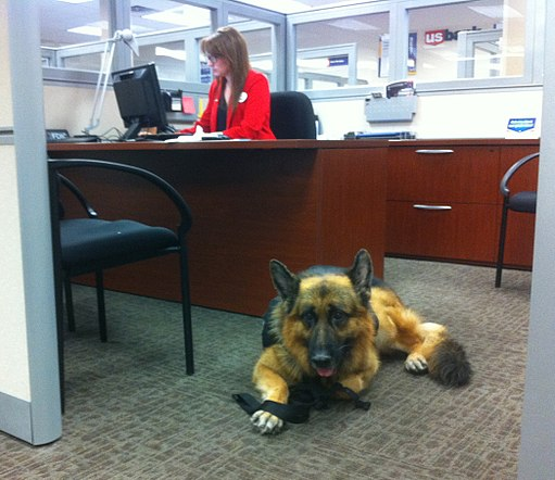 Service Dog at the bank