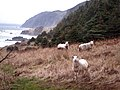 Sheep on the Green Garden's Trail.jpg