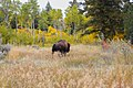 Shoshone National Forest - Wapiti Ranger District - October 2017 05.jpg