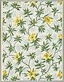 Sidewall - Floral (France), 1913 (CH 18383455).jpg