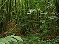 Signs of a well-managed woodland - geograph.org.uk - 544425.jpg