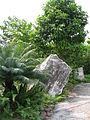 Singapore Botanic Gardens, Evolution Garden 5, Sep 06.JPG