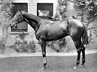 Sir Visto British-bred Thoroughbred racehorse