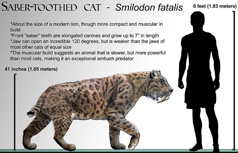 Ficheiro:Smilodon fatalis life-restoration '08.jpg