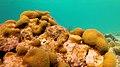 Snorkeling Webers Joy, Bonaire (12841253625).jpg