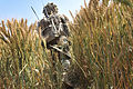 Soldier Patrolling Through Cornfield in Afghanistan MOD 45155496.jpg