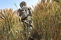 Soldier Patrolling Through Cornfield in Afghanistan MOD 45155496.jpg
