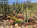 Sonoran Desert3.jpg
