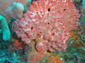 Sponge at Xstacy reefdsc04420.jpg