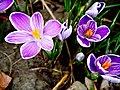 Spring is here, à la Fuji Velvia (7103725701).jpg